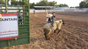 The mutton bustin' portion of the Junior Rodeo have little ones hanging on for dear life as their bucking sheep tear out the chute and into the rodeo grounds.