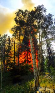 """Although a few trees like this one are still on burning within the perimeter of the Porcupine Ridge fire, Sanpete Ranger Kyle Beagley says the fire activity has become """"basically non-existent."""" Closures on  roads and trails in the vicinity have been lifted."""